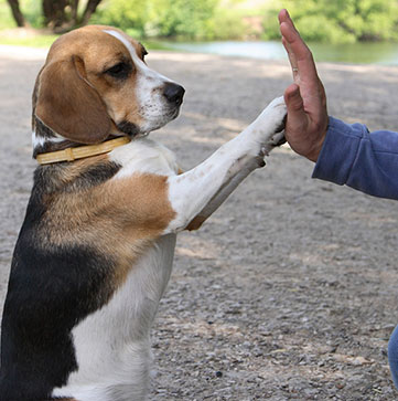 Coaching - Dog High Five